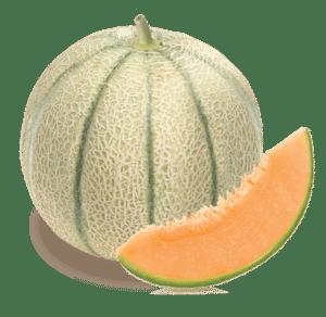 melon-charentais