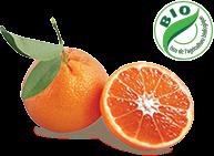 nadorcott-bio