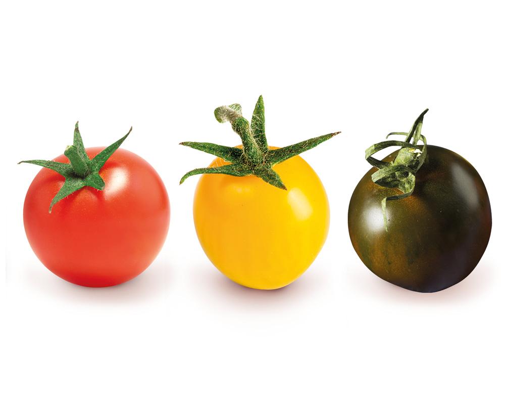 tomate-cerise-allongee